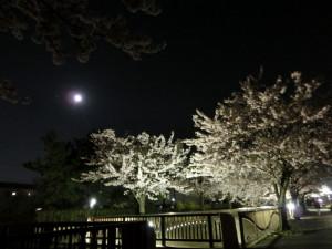 14日満月と夜桜