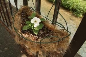 植え替えられた花かご