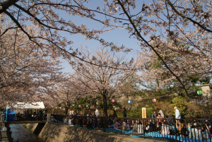 御経塚町内会のお花見