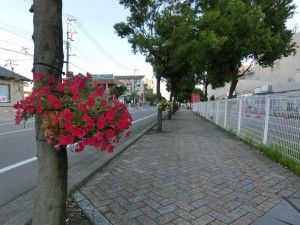 御経塚まちづくり:里親の世話する花かご