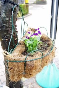 植え替えられた花かごの苗
