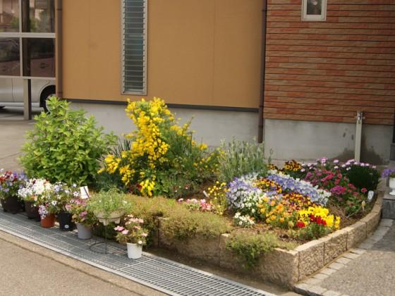 住宅前の花