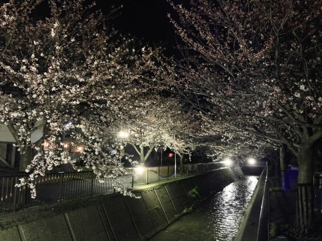 ライトアップされた馬場川緑道の桜 2014年4月3日撮影